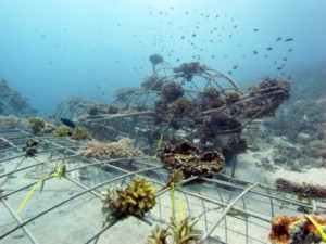 Renewing-our-Coral-Reefs-7