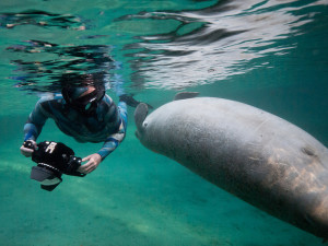 Freediving - Ten Common Myths about Freediving by Mark Harris - photo 4