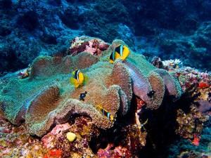 Clown fish in anemones were so plentiful that it was difficult to choose a favorite