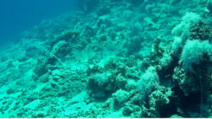 Renewing-our-Coral-Reefs-2