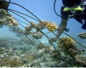 Renewing-our-Coral-Reefs-4